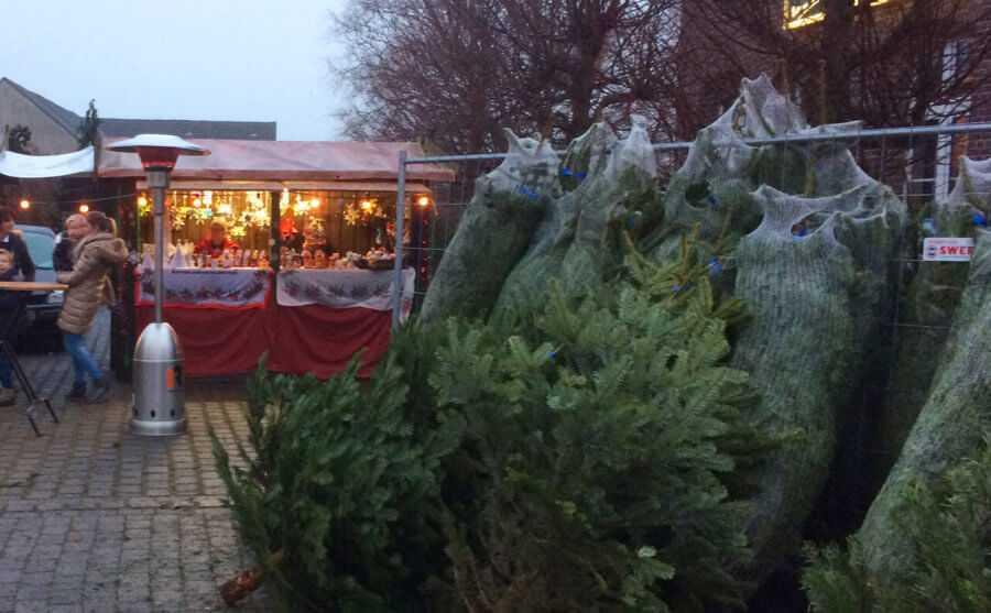 Mehrer Weihnachtsmarkt Weihnachtsbäume